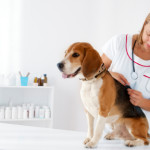 Overview of Vet Tech Certification And License Procedures