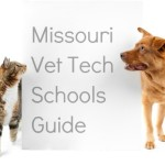 Vet Tech Requirements And Schools In Missouri