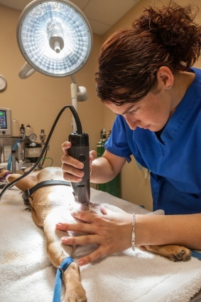 surgical vet tech scrubs