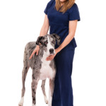 Different Types of Vet Tech Jobs Out There