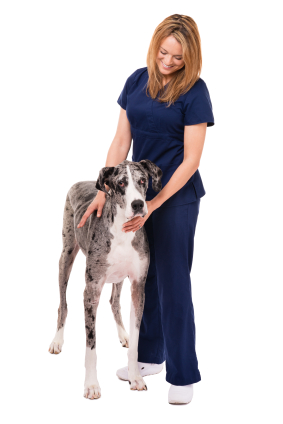 working as a veterinary technician