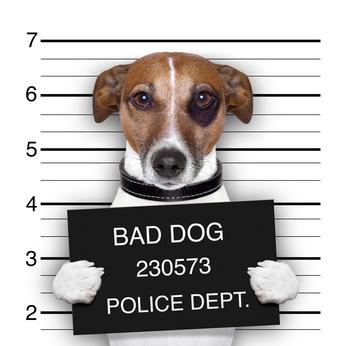 animal control career