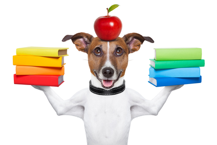 education requirements to worth with animals