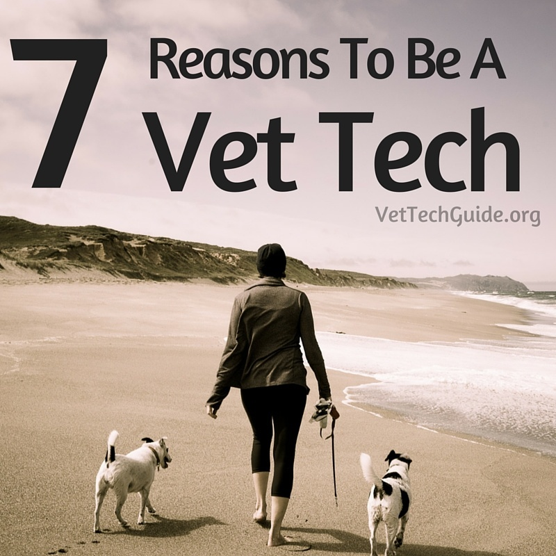 7 reasons to be vet tech
