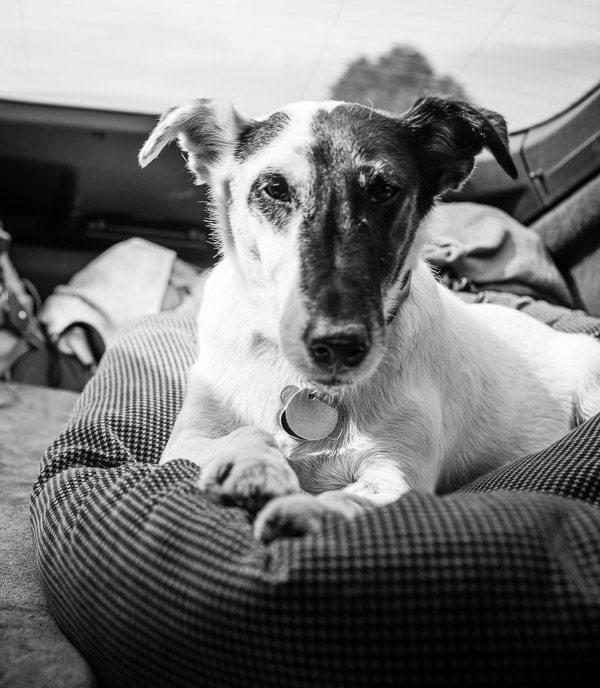 pet going to a vet