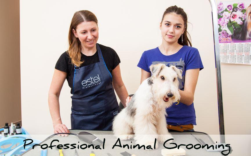 professional animal grooming