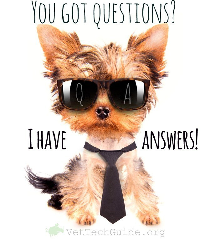 5 Questions To Ask Yourself Before Embarking On A Vet Tech ...